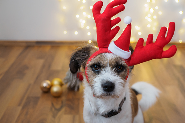 holiday safety for dogs 9 tips - Holiday Safety for Dogs: 9 Tips