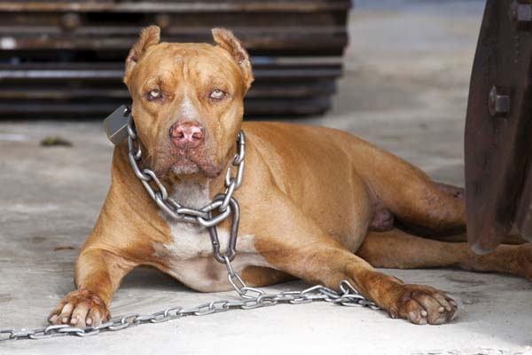 shutterstock 2112076661 - Why I Am Against Tethering a Dog When You're Not Around