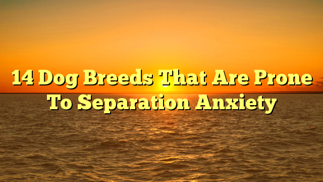 14 Dog Breeds That Are Prone To Separation Anxiety
