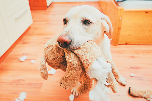 1515227590 what to do to stop dog chewing - What to Do to Stop Dog Chewing