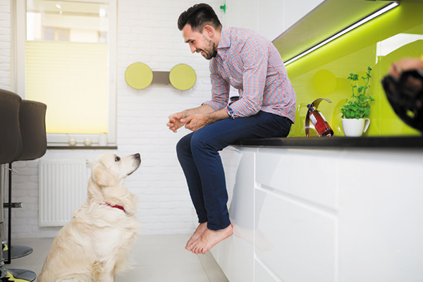 legal woes for nyc pet sitters - Legal Woes for NYC Pet Sitters