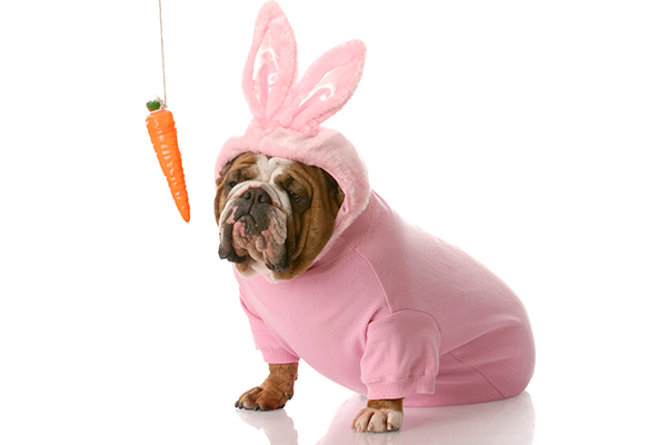 Can You Feed Carrots To Dogs